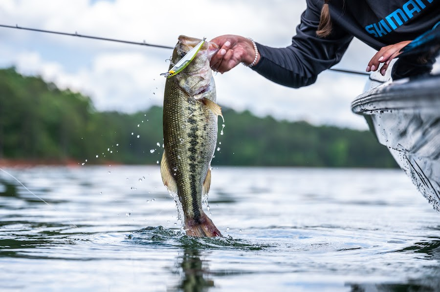 Read more about the article Shimano Unveils the World Minnow 115SP
